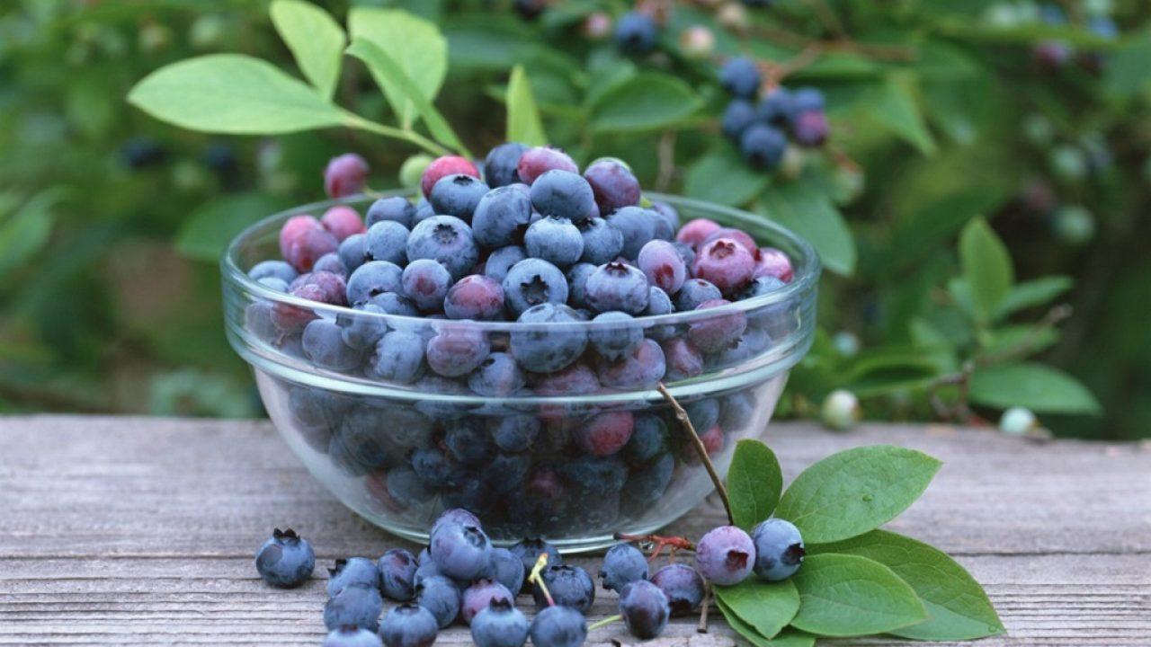 24 de fructe de grăsime)