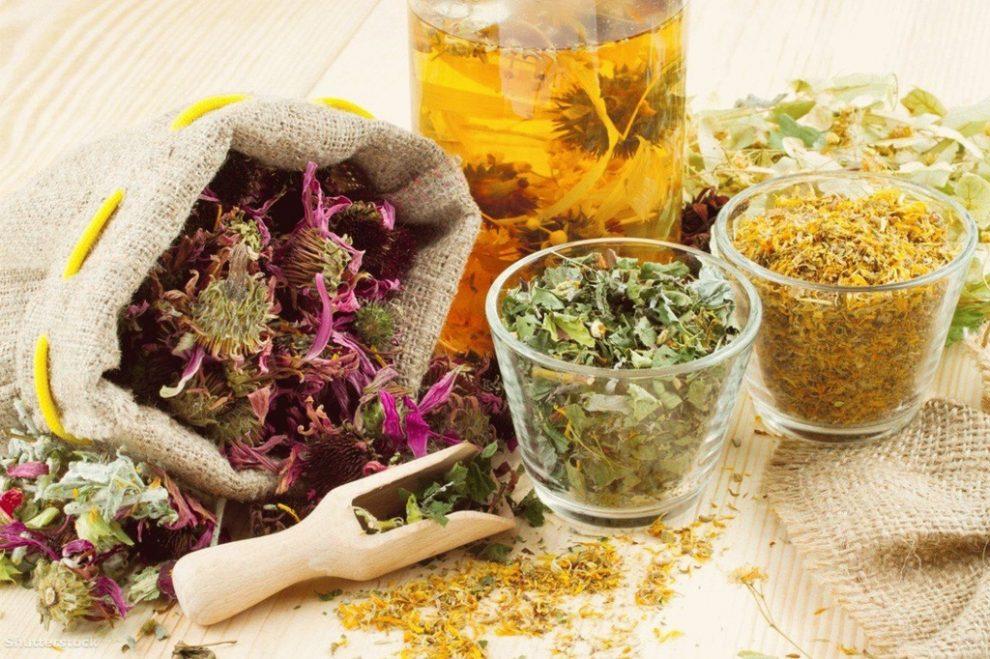 Plantele medicinale de la A la Z si proprietatile acestora