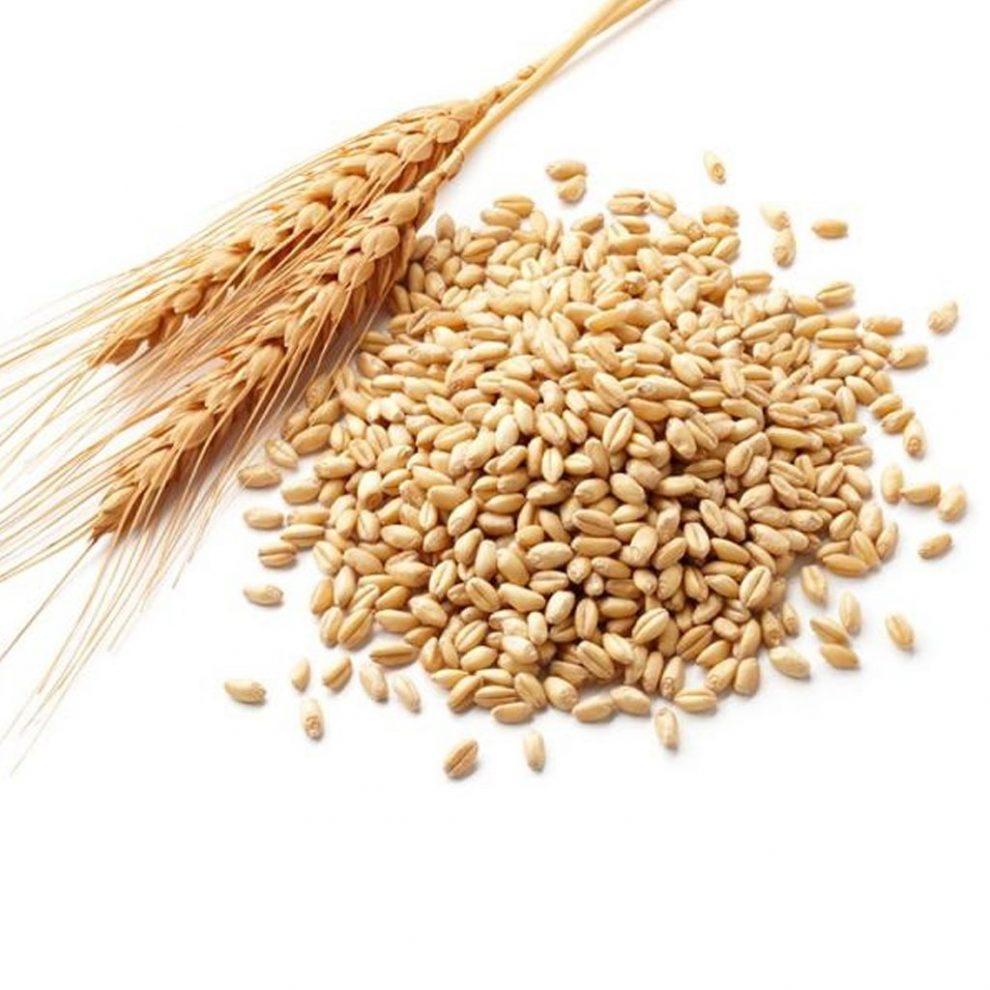 Tratamentul cu germeni de grâu, o minune pentru sănătate. Au o ...